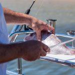 Tubular Baitboard makes filleting fish easy