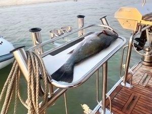 Stainless steel Australian made bait board